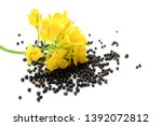 Rapeseed Plant With Yellow...