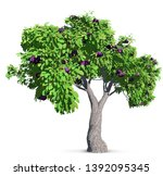 fig tree isolated with high... | Shutterstock . vector #1392095345