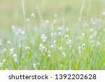 white  flower  grass  in  the ... | Shutterstock . vector #1392202628