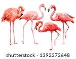 Set Of  Pink Flamingo On An...