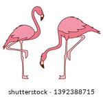 exotic pink flemish couple... | Shutterstock .eps vector #1392388715