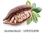 cocoa pod with fresh cocoa... | Shutterstock . vector #139251698