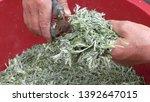 sprig of medicinal wormwood on... | Shutterstock . vector #1392647015