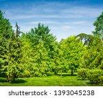 backyard and garden with manu... | Shutterstock . vector #1393045238
