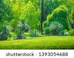 backyard and garden with manu... | Shutterstock . vector #1393054688