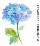 Beautiful Hydrangea Blue...