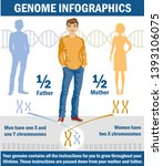 genetic inheritance. sex... | Shutterstock . vector #1393106075