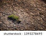 green grass breaking through... | Shutterstock . vector #1393278695