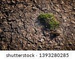 green grass breaking through... | Shutterstock . vector #1393280285