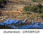honghe yuanyang  samaba rice... | Shutterstock . vector #1393389125