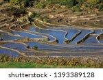 honghe yuanyang  samaba rice... | Shutterstock . vector #1393389128
