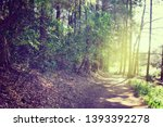 road in the woods  light coming ... | Shutterstock . vector #1393392278