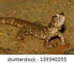 chinese crocodile lizard   Shutterstock . vector #139340255