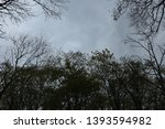 tree branches against the sky.... | Shutterstock . vector #1393594982