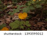 small yellow flower in the... | Shutterstock . vector #1393595012