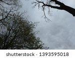 trees against the dark sky.... | Shutterstock . vector #1393595018