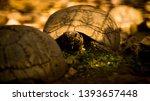 Stock photo tortoise wildlife photos tortoise in jungle beautiful tortoise 1393657448