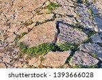green grass breaking through... | Shutterstock . vector #1393666028