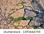 green grass breaking through... | Shutterstock . vector #1393666745