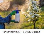 spraying fruit tree by...   Shutterstock . vector #1393701065
