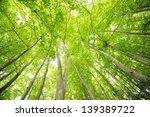 beech forest   Shutterstock . vector #139389722