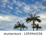Tops Of Palm Trees Against The...