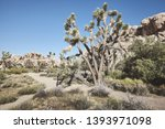 color toned picture of the... | Shutterstock . vector #1393971098