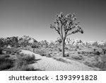 black and white picture of... | Shutterstock . vector #1393991828