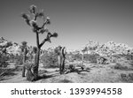 black and white picture of... | Shutterstock . vector #1393994558