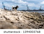 small dog in red harness... | Shutterstock . vector #1394003768