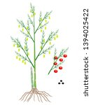 parts of a asparagus plant on a ...   Shutterstock .eps vector #1394025422