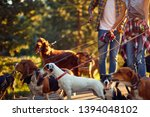 Stock photo couple dog walkers with group dog enjoying in park 1394048102