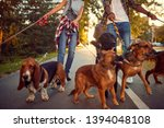 Stock photo dog walker funny walking with with group of dogs outdoors 1394048108