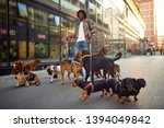 Stock photo happy professional dog walker man in the street with lots of dogs 1394049842