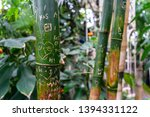 Green House Bamboo Sticks With...