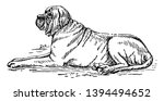 mastiff is a breed of extremely ... | Shutterstock .eps vector #1394494652