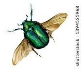 Beautiful Beetle Golden...