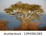 panoramic view from coastal... | Shutterstock . vector #1394581385