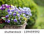 Stock photo flowers garden 139459592