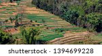honghe yuanyang  samaba rice... | Shutterstock . vector #1394699228