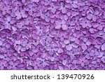 Violet Lilac Flower Background...