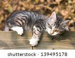 Stock photo kitten playing 139495178