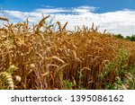a field with wheat in front of...   Shutterstock . vector #1395086162