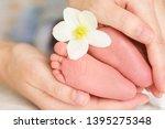 baby feet in mom's hands... | Shutterstock . vector #1395275348