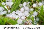 hail on green green grass