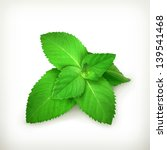 fresh mint leaves  vector... | Shutterstock .eps vector #139541468