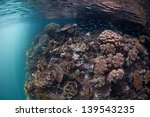 Warm  Clear Water Bathes The...