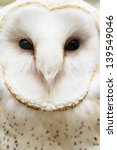 extreme closeup of white owl 3... | Shutterstock . vector #139549046