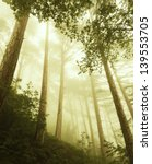 Mystical Deep Fog In A Forest .