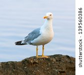 Seagull Standing On A Rock By...